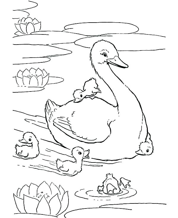 600x734 Babies Coloring Pages Baby Duck Mother Of And