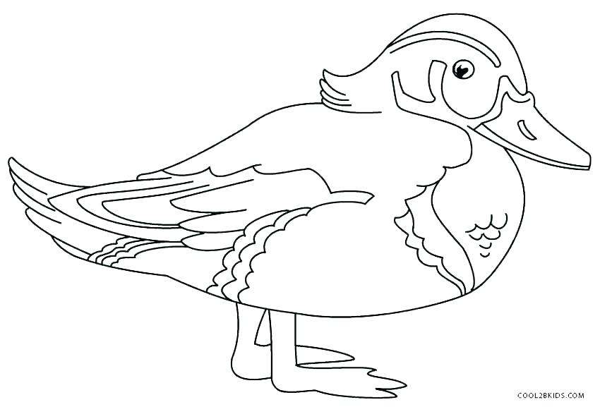 850x577 Ducks Coloring Pages How To Draw Baby Duck Page Oregon