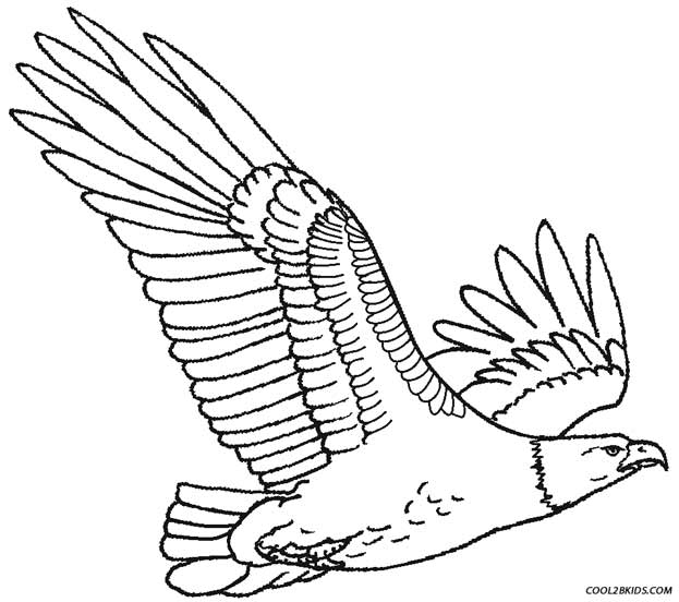 623x552 Printable Eagle Coloring Pages For Kids Cool2bKids