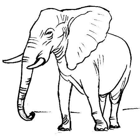 451x440 How To Draw An Elephant