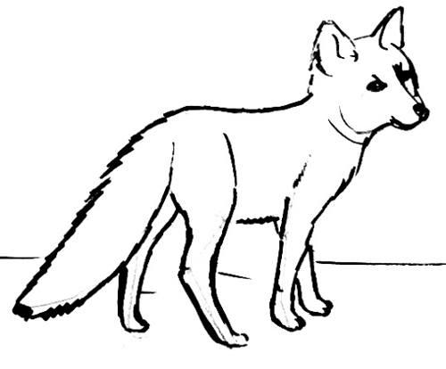 500x414 Baby Fox Drawing 064