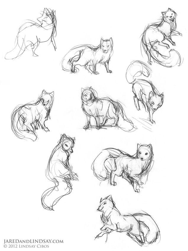 635x850 Drawn Fox Line Drawing
