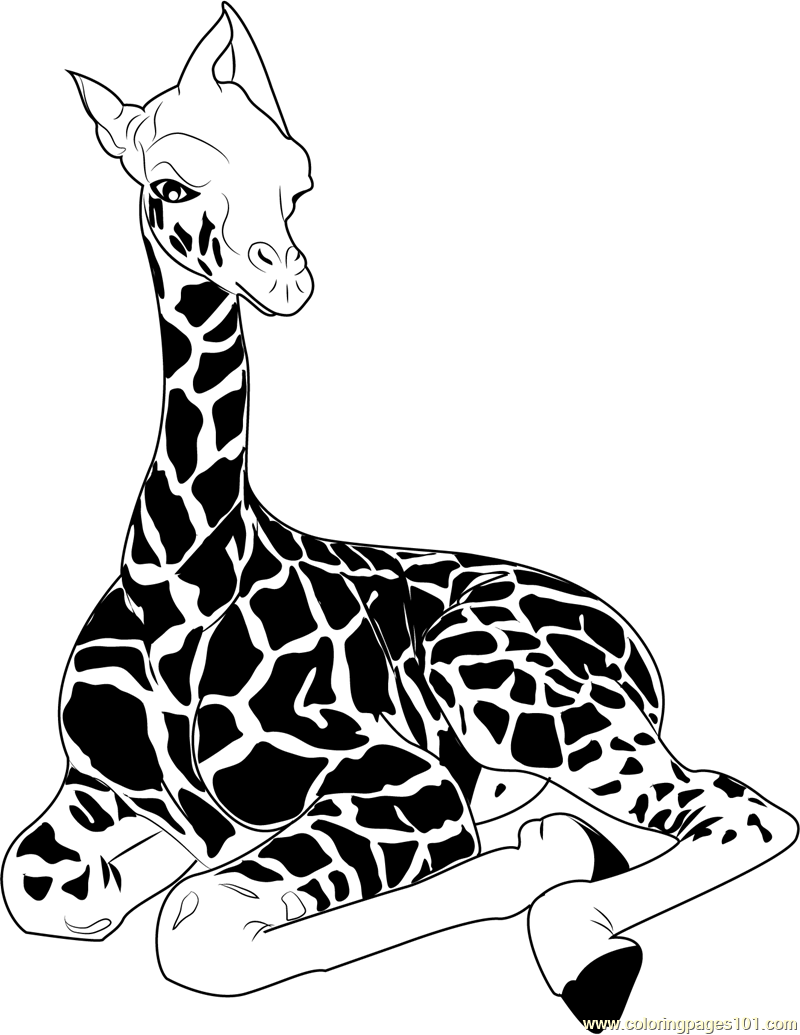 800x1035 Baby Giraffe Sitting Coloring Page