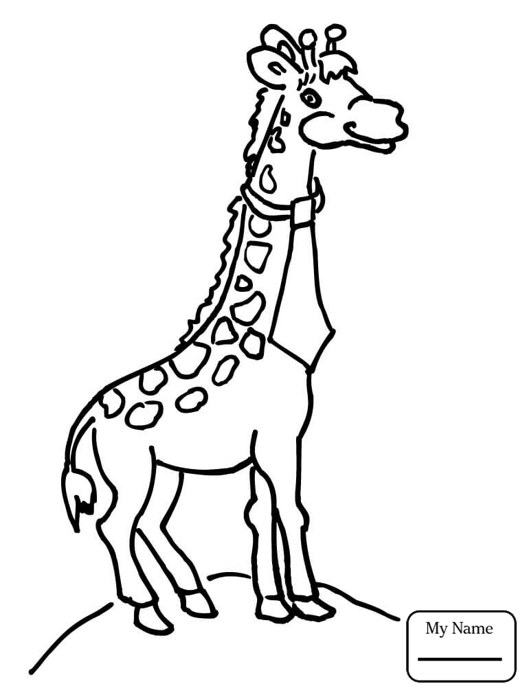 767x1012 Baby Giraffe Mammals Coloring Pages For Kids