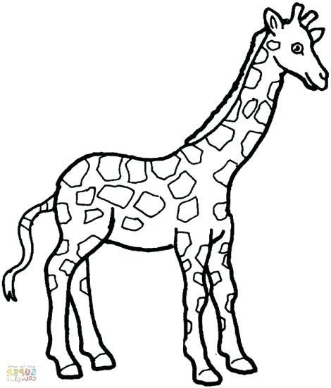 470x551 Giraffe Coloring Pages Printable Giraffe Colouring Pictures