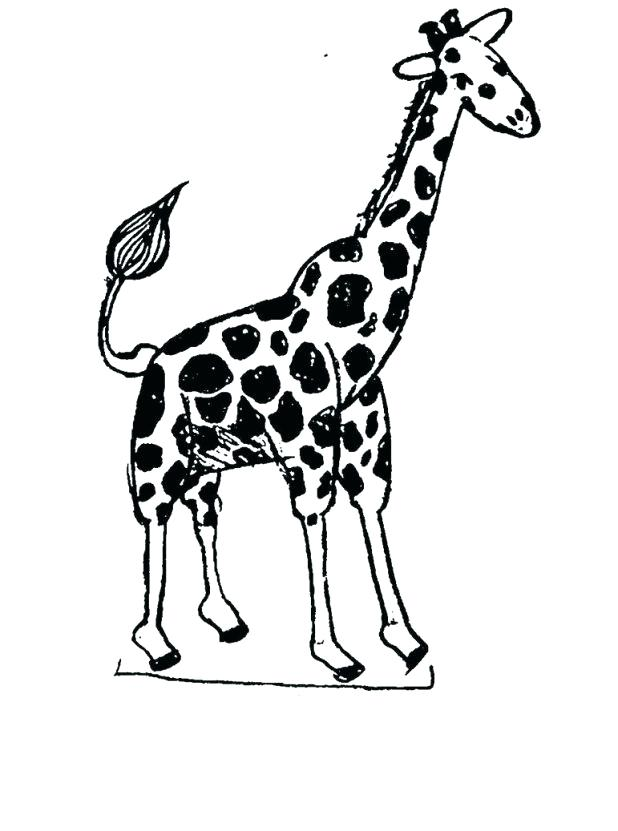 618x831 Baby Giraffe Coloring Pages