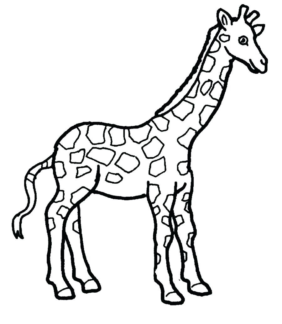 900x1034 Coloring Giraffes Coloring Pages Giraffe Drawing Page Free