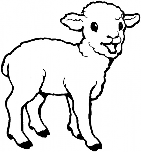 486x525 Coloring Pages Of A Baby Lamb Sheep Free Download