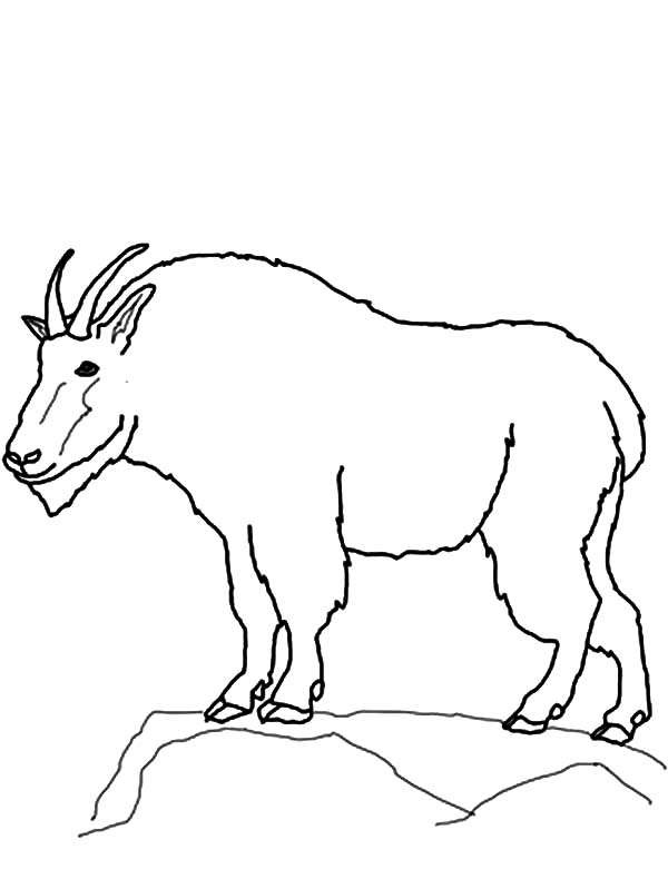 600x799 Drawing Mountain Goat Coloring Pages Color Luna
