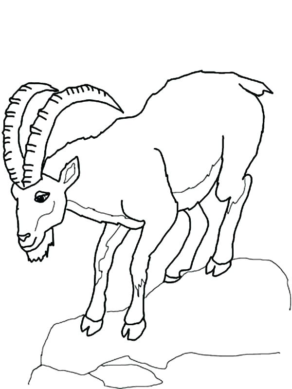 600x799 Drawing Mountain Goat Coloring Pages Color Free Printable Murs