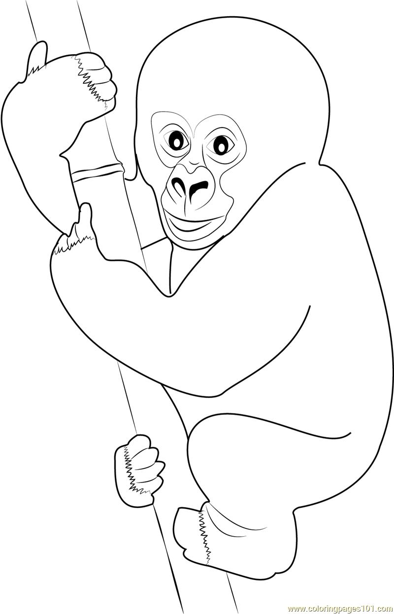 800x1246 Cute Gorilla Baby Coloring Page