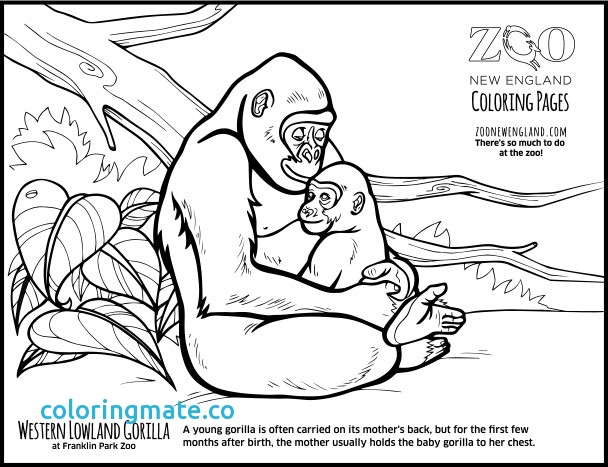 608x467 Gorilla Coloring Page Inspirational Gorilla Mask Craft Google