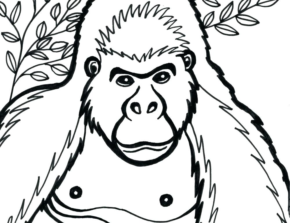 1000x768 Gorilla Coloring Pages Coloring Pages Printable To Sweet Draw Cute