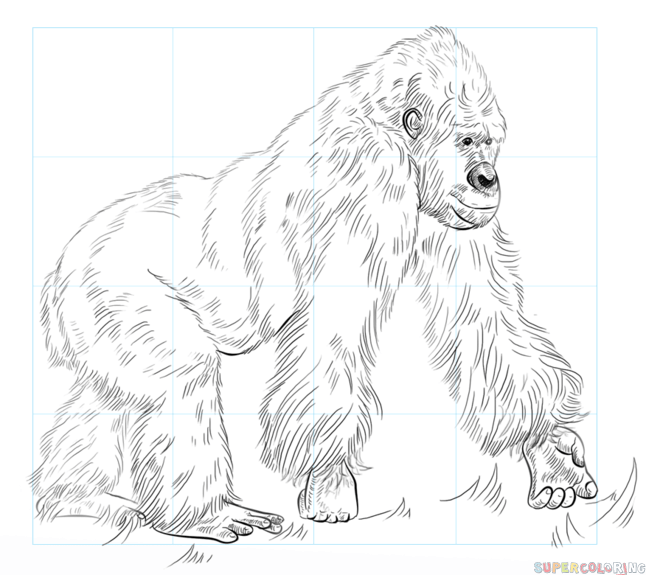 646x575 How To Draw A Gorilla Step By Step Drawing Tutorials