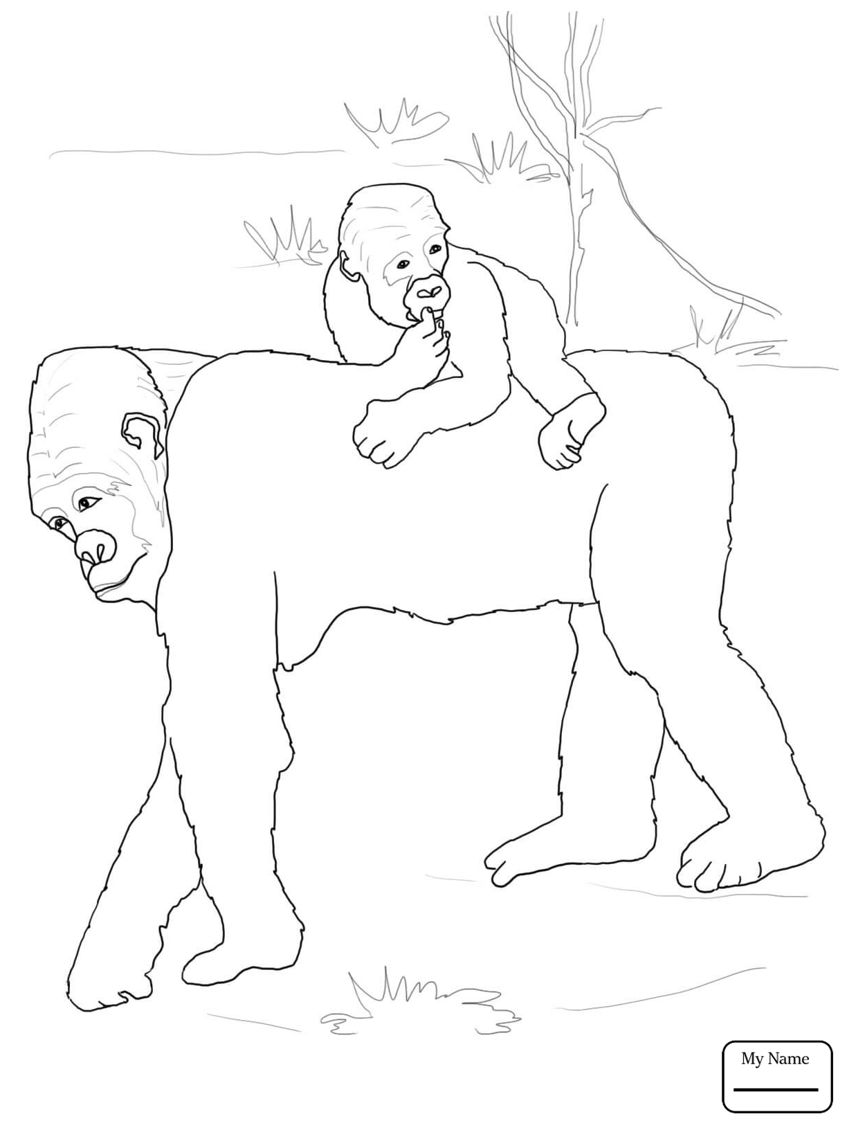 1224x1632 Coloring Pages Mammals Apes Baby Gorilla On Mother S Back