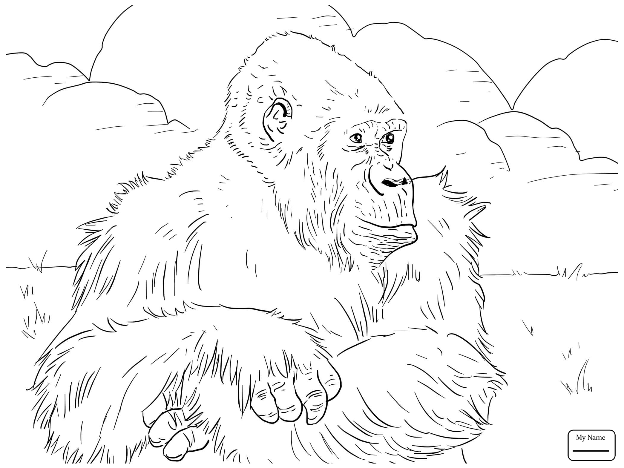 2089x1567 Mammals Baby Gorilla On Mother S Back Coloring Pages For Kids