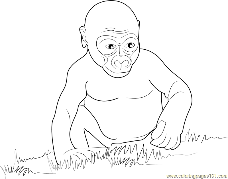 800x631 Baby Gorilla Coloring Pages Baby Gorilla Coloring Page For Teens
