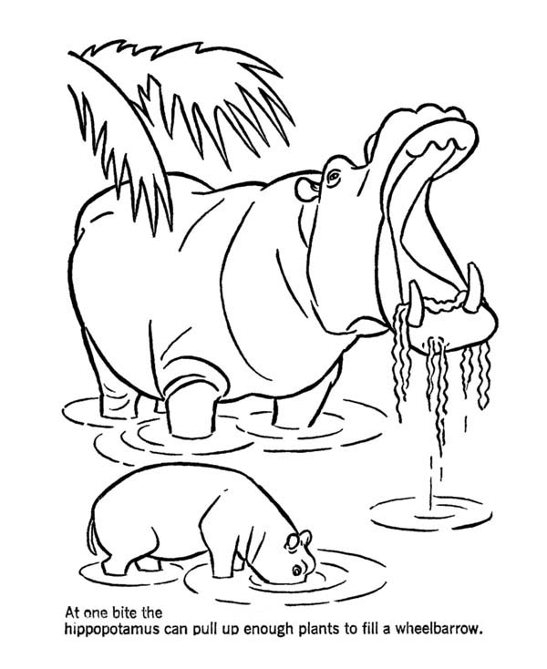 600x734 Mother Hippo And Her Baby In The Lake Coloring Page
