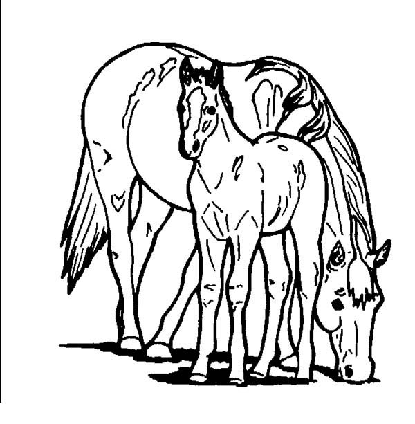 600x613 Horse Eating With Baby Horse In Horses Coloring Page