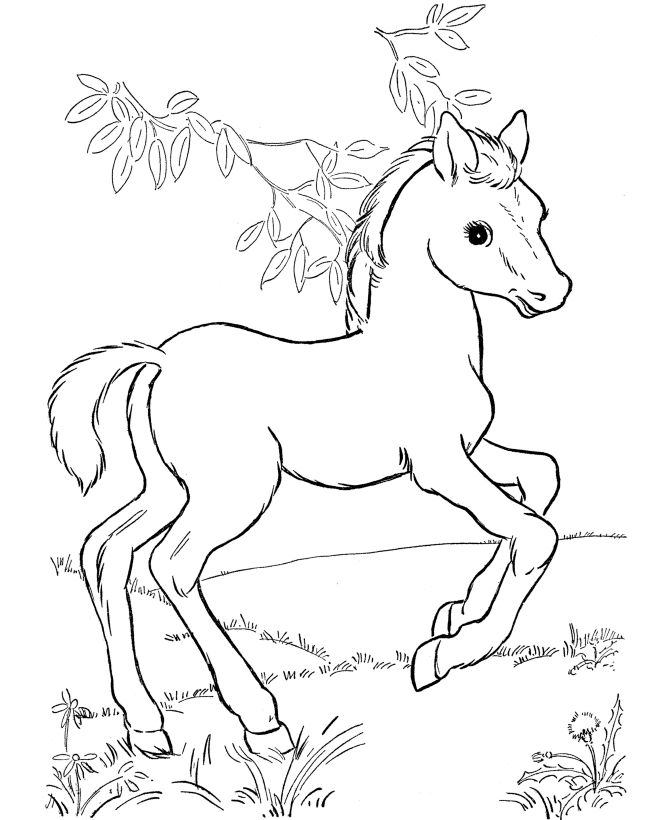 670x820 Horse Pictures To Color Horse Coloring Page Young Foals Play