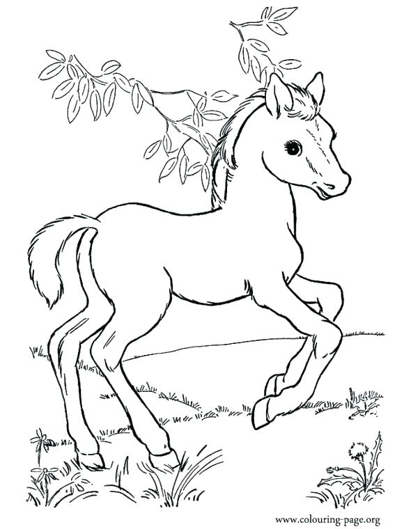 590x760 Baby Horse Coloring Pages Joandco.co