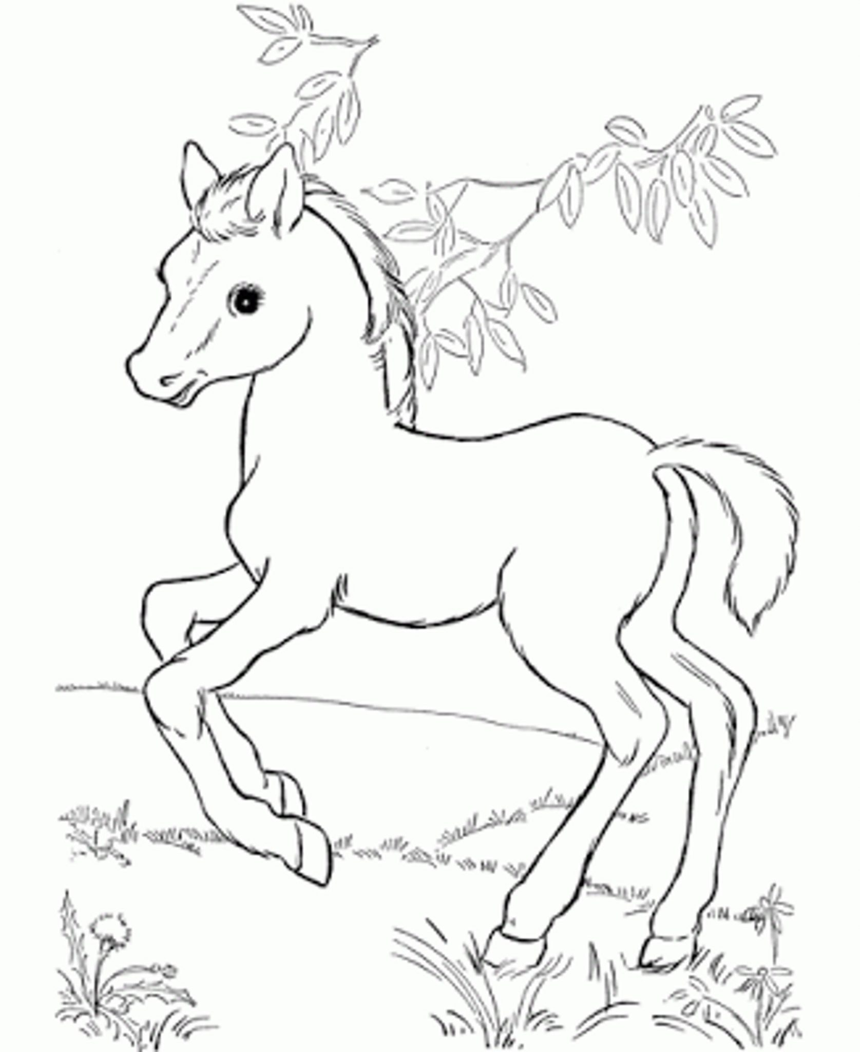 1675x2048 Baby Horse Coloring Pictures Coloring Page For Kids