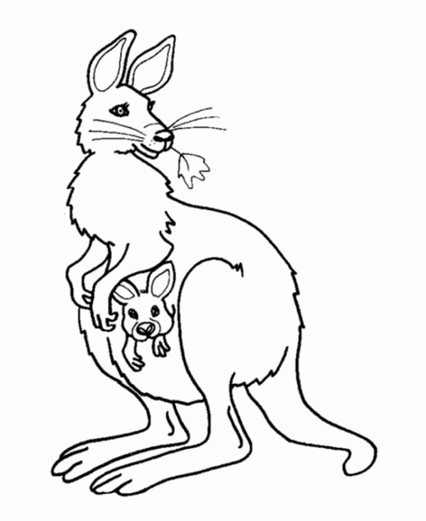 600x734 Kangaroo And Baby Kangaroo In The Pouch Coloring Page