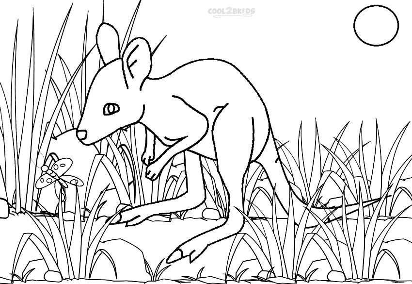 850x585 Printable Kangaroo Coloring Pages For Kids Cool2bkids