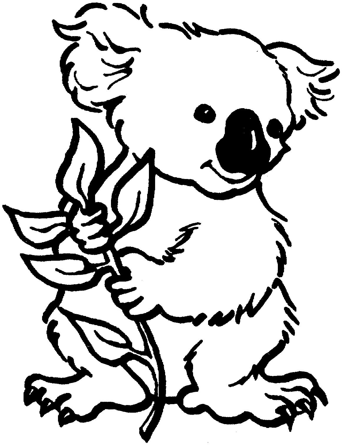 1162x1514 Baby Koala Bear Coloring Pages Coloring Pages