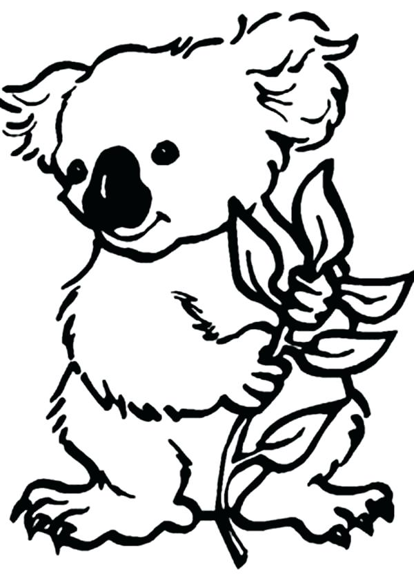 Baby Koala Drawing At Getdrawingscom Free For Personal Use Baby - Koalas-coloring-pages