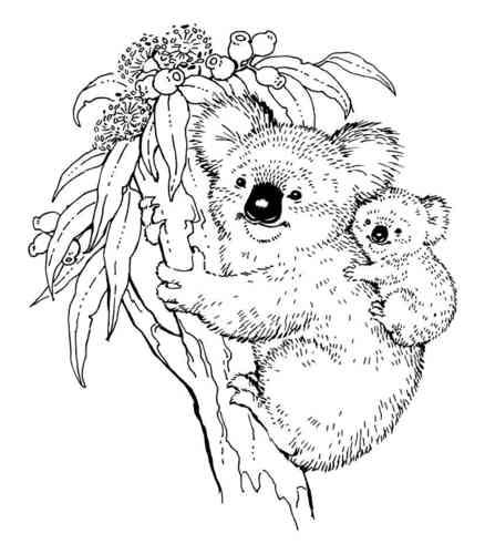 438x500 Koala Amp Baby