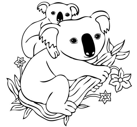 480x445 Baby Koala On Mother's Back Coloring Page Free Printable