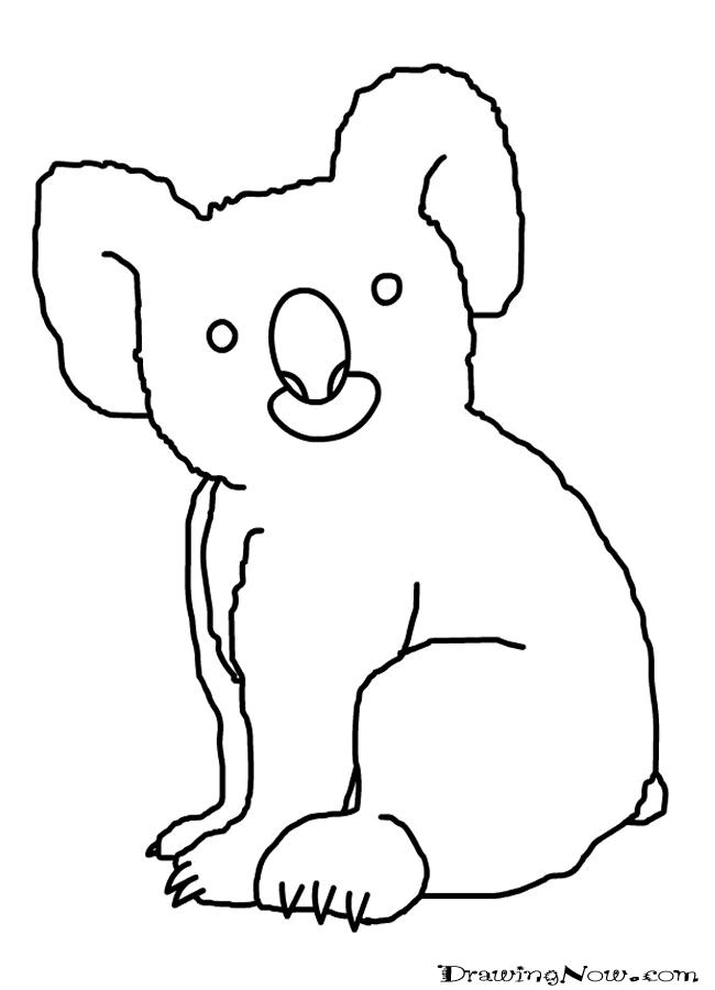 650x900 Best Photos Of Easy To Draw Koala Bear