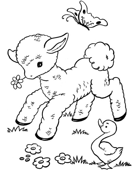 564x690 Cute Baby Lamb Free Coloring Page Animals, Lamb Coloring Pages