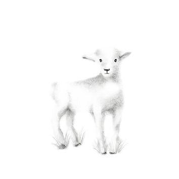 354x354 Drawn Lamb Baby Goat