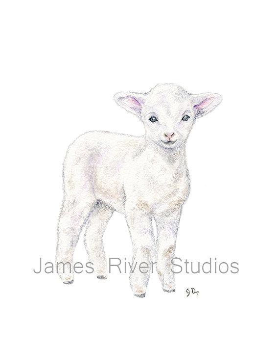 570x713 Lamb Art Lamb Painting Lamb Print. Lamb Watercolor Painting