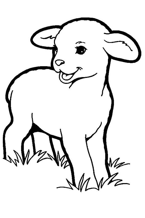 567x850 Lamb Coloring Pages Resumemat Download Pdf Ideas
