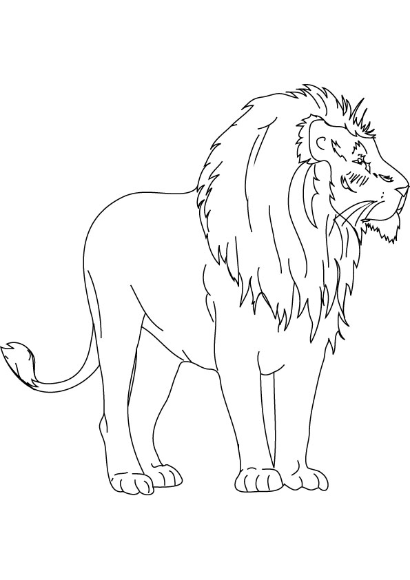 595x842 Baby Lion Coloring Drawing