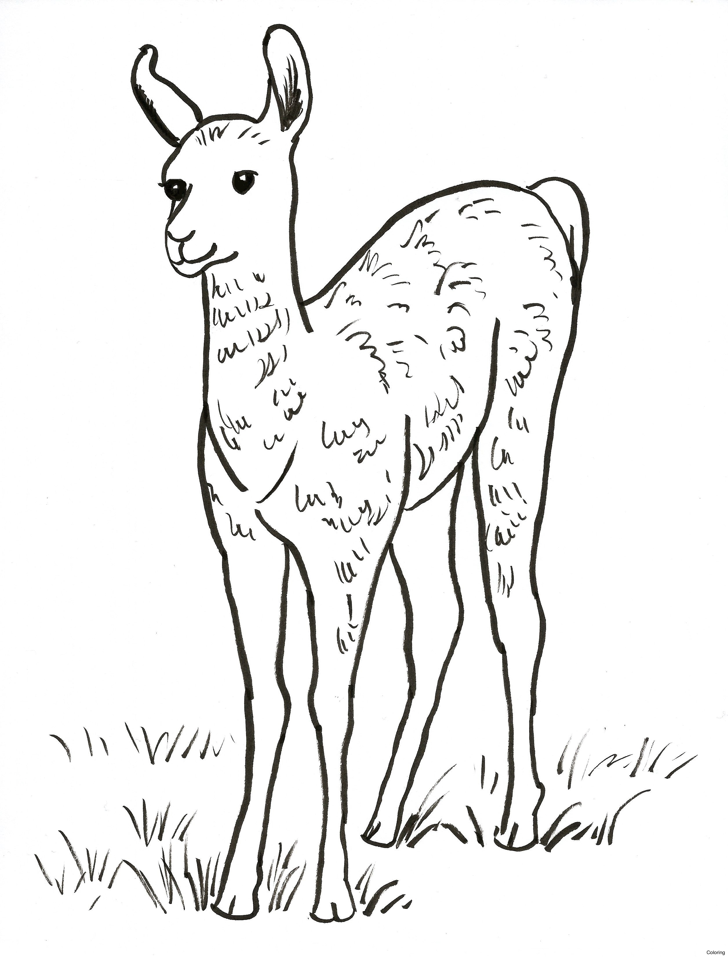 2512x3302 Llama And Alpaca Coloring Page Pages 0f Baby Free Diaiz