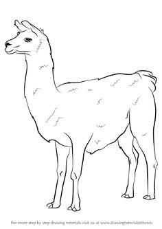 236x333 Llama Drawing 13 Llamas Llama Drawing, Drawings