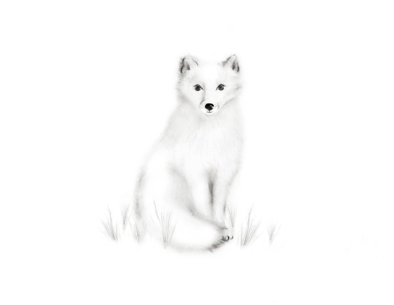 1500x1159 Arctic Fox Nursery Art Pencil Drawing Gender Neutral Baby