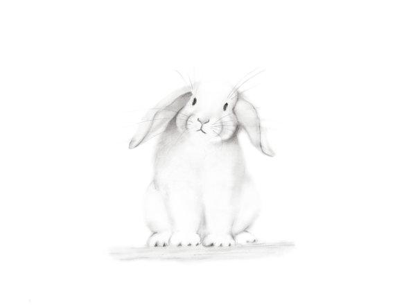 570x440 Bunny Nursery Art Pencil Drawing Animal Print Baby Animal
