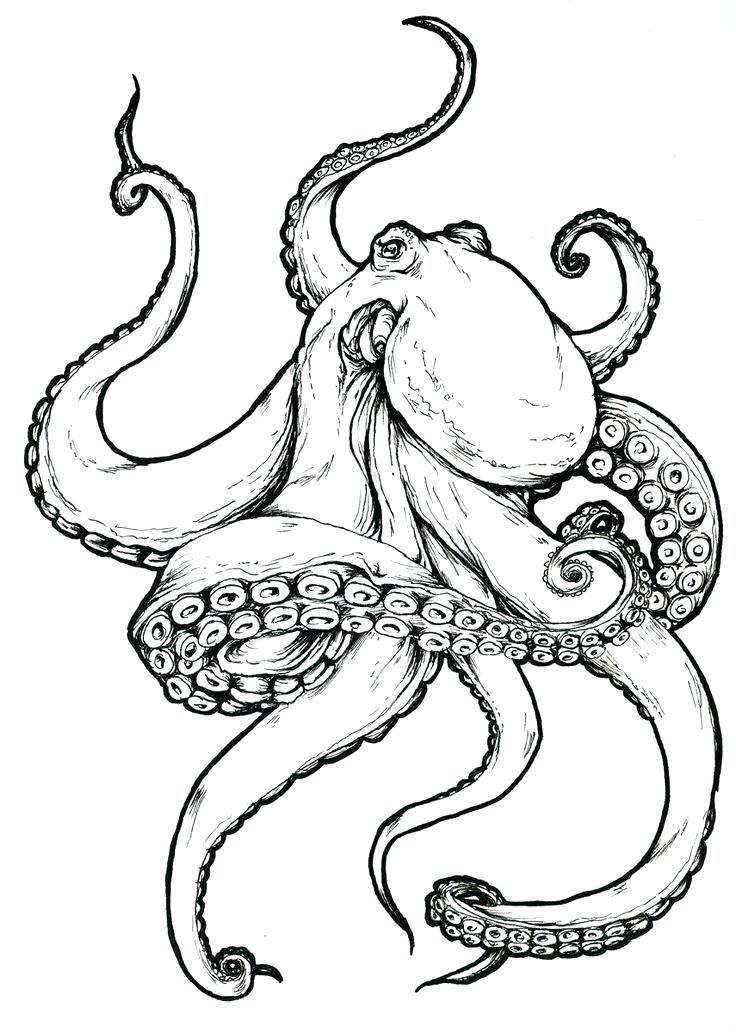 736x1032 How To Draw Octopus Draw An Octopus Steps 8 And 9 Octopus