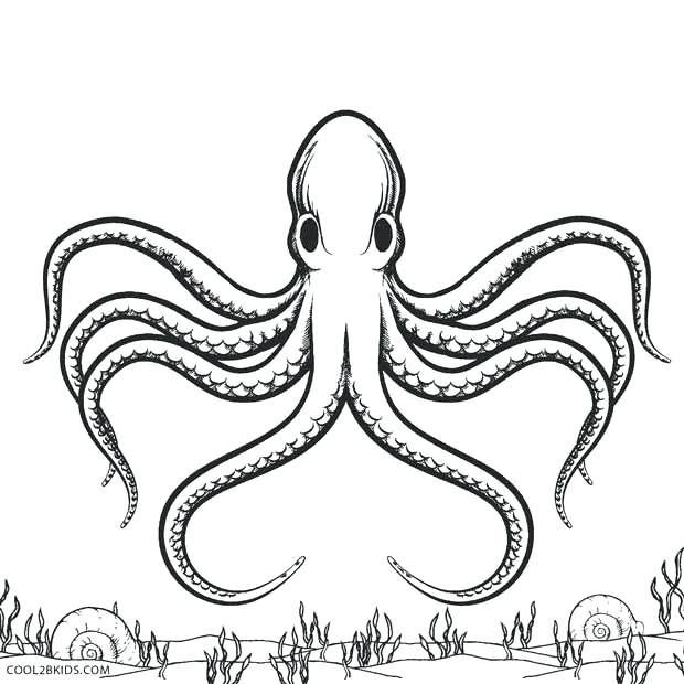 620x620 Octopus Coloring Page Common Octopus Coloring Page Baby Octopus