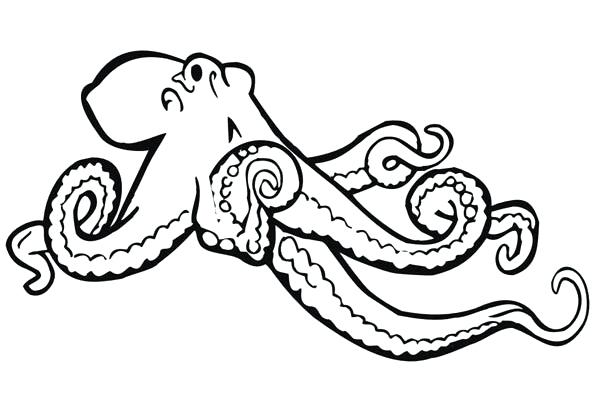 598x420 This Is Octopus Coloring Page Images Giant Octopus Coloring Page