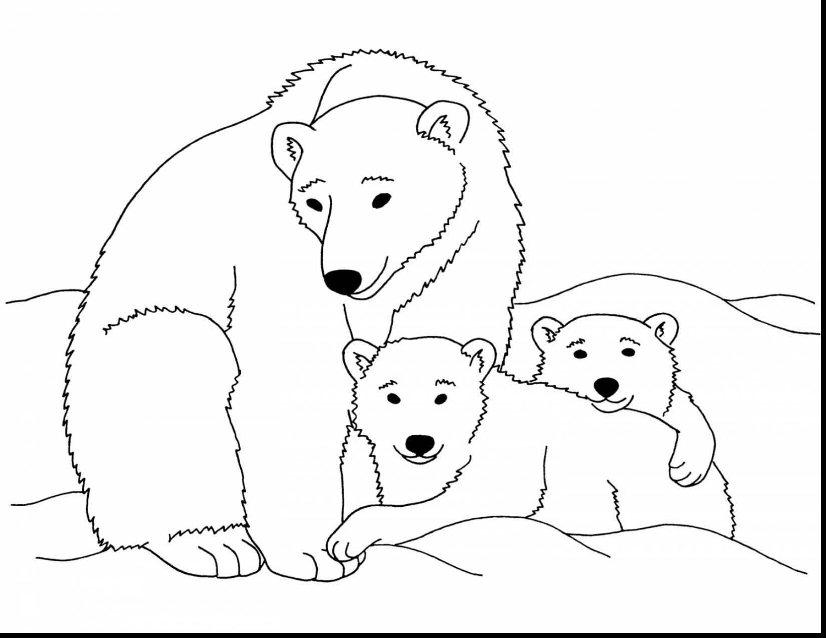 1650x1274 Baby Polar Bear Coloring Pages