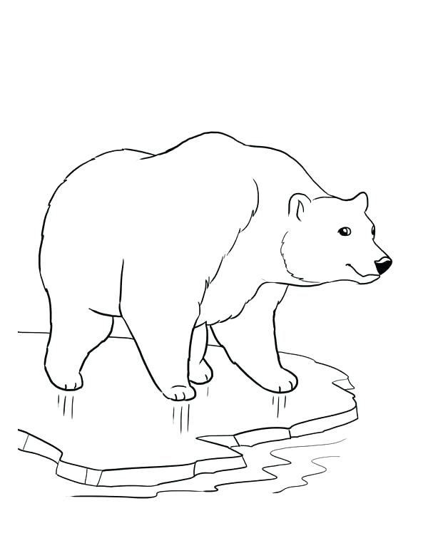 600x776 Polar Bear Coloring Pages Polar Bear Coloring Pages Baby Polar