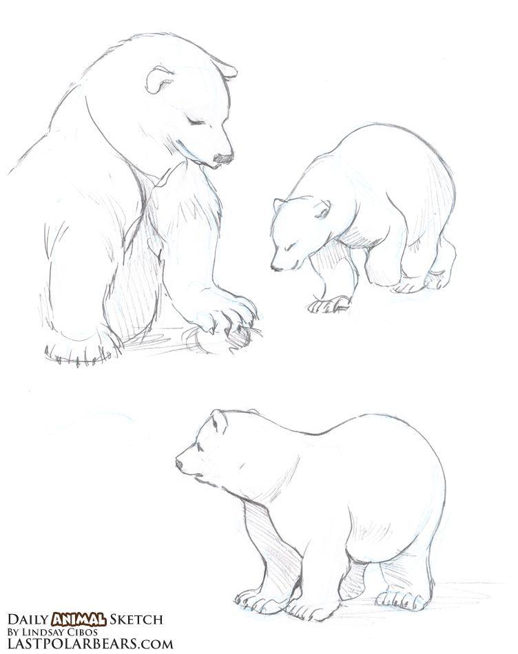 752x950 The Last Of The Polar Bears