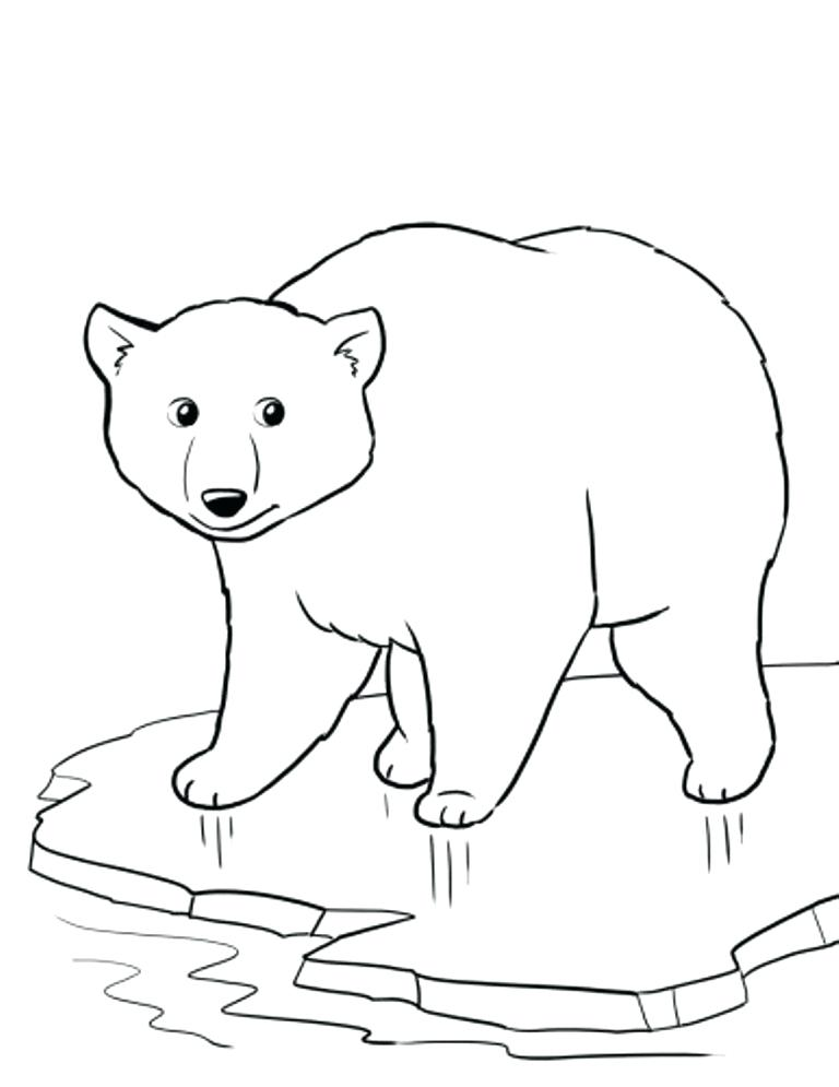 768x995 Top Rated Polar Bear Coloring Pages Images Baby Polar Bear