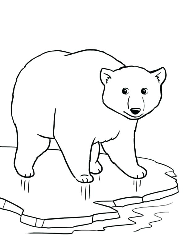 600x777 Top Rated Polar Bear Coloring Pages Images Polar Bears Printable